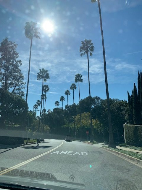 Beverly Hills Palm Trees drive